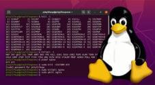 kill process on linux